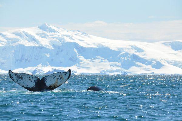 Antartic_9